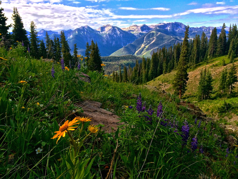 1238_Sneffels_Highline_Wildflowers