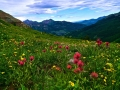 1151_Wildflower_Meadow