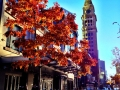 0869_Denver_Autumn