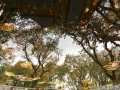 7159_Central_Park_Reflection