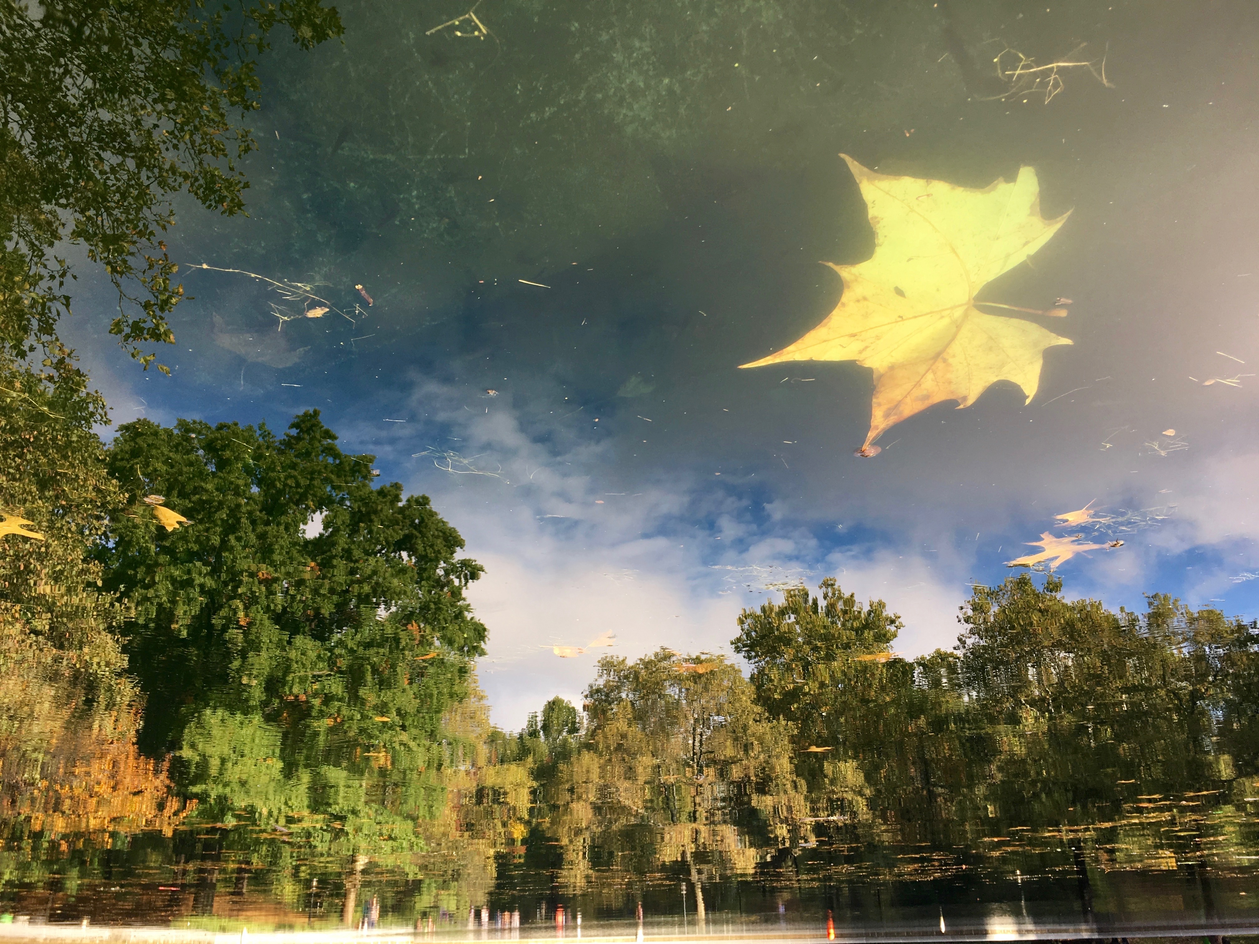 7303_Conservatory_Water_Reflection