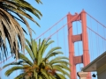 0558_Golden_Gate_Palms