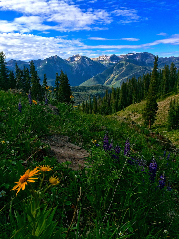 1237_Sneffels_Highline_Wildflowers