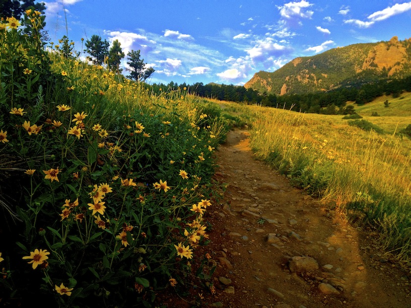 5268_wildflower_path