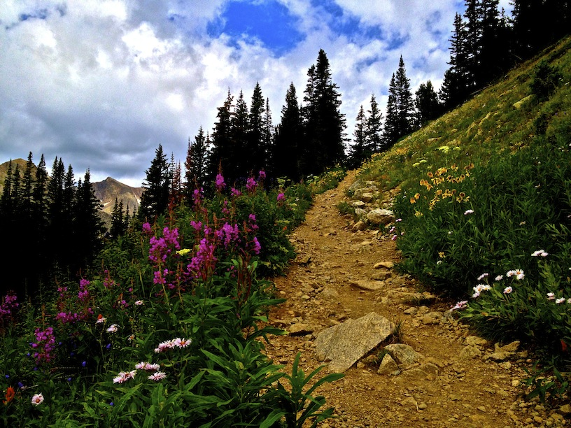 6047_wildflower_path