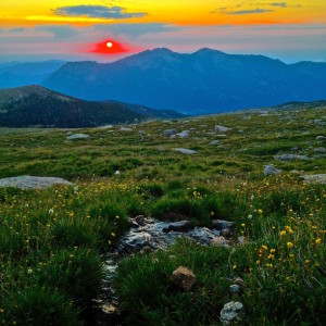 Wildflower Sunrise - Rocky Mountain National Park